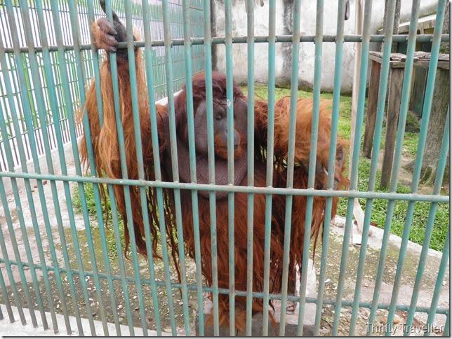 Orangutan cage at Bukittinggi Zoo