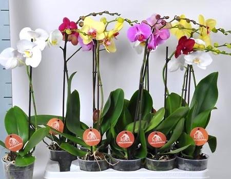 Секреты выращивания орхидей: все, что нужно знать (ФОТО)