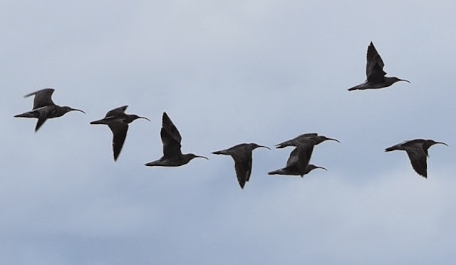Passing Birds