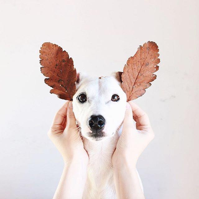 Imagenes De Perros Gif De Perritos Navideños Para Compartir En