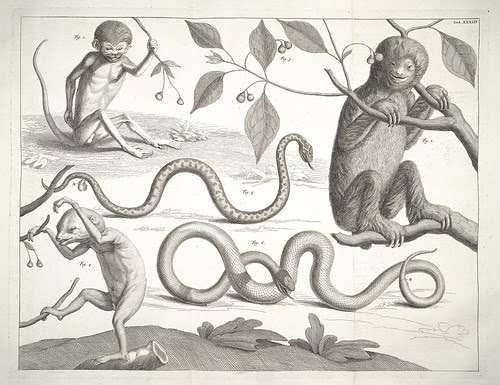 3-toed sloth and stylised ape figures