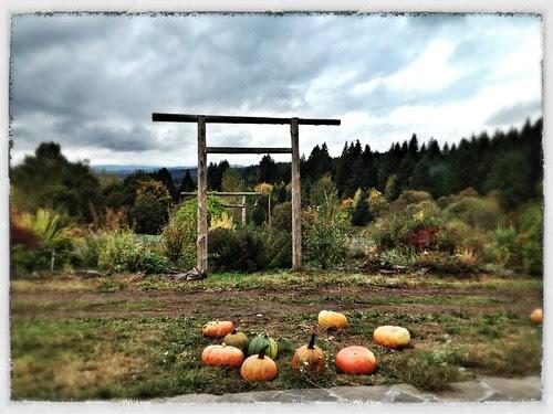Western view at Pumpkin Ridge Gardens
