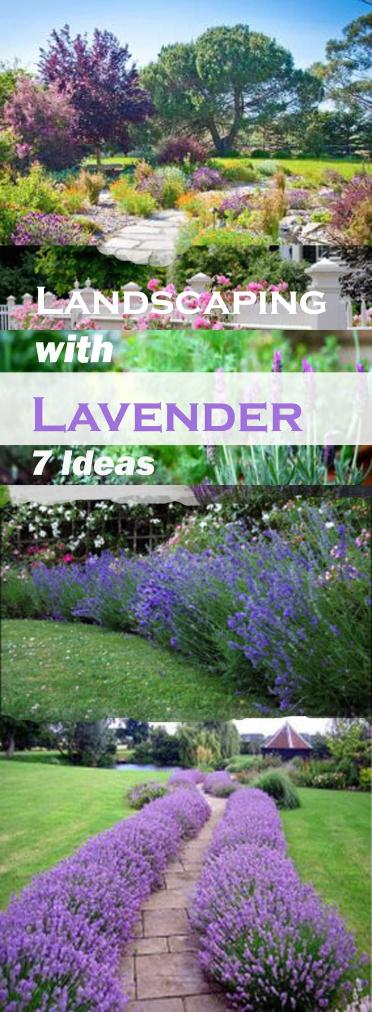landscaping with lavender gardening idea