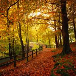 herbst gold