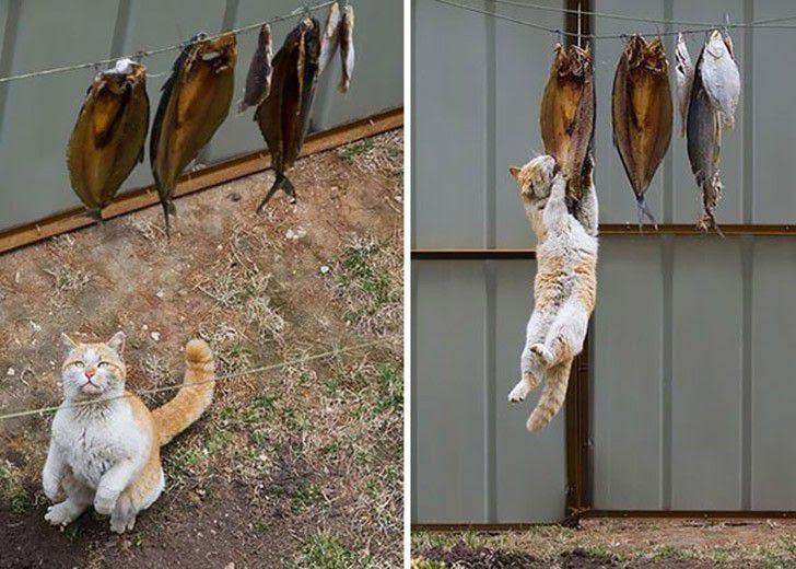 Cats-swindlers