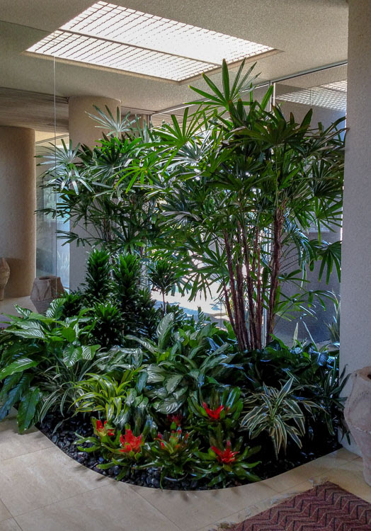 Indoor Plant Care for All of Your Plant Needs