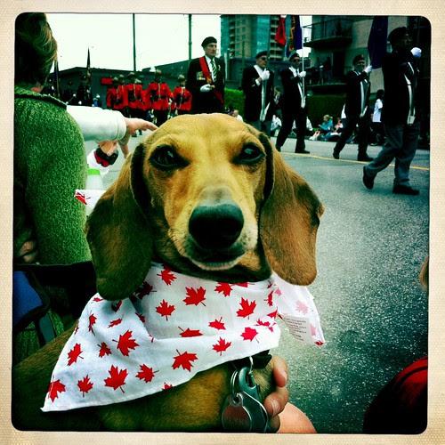 Flynn at the parade