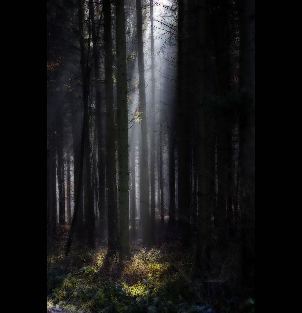 Forest of Gondor (BLACK FOREST)