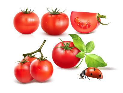 トマトてんとう虫葉のイラストaieps ベクタークラブ