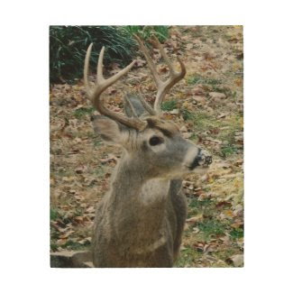 Whitetail Deer Three Point Antlers Wood Wall Art