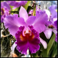 That should be enough #thailand #orchid for now. #travel #flower