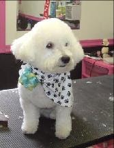 K Style Dog Grooming