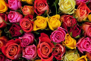 Ramo De Flores De Colores Naturales