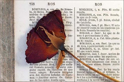 1ª declinación: Rosa, rosae.