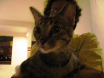 HDB cat