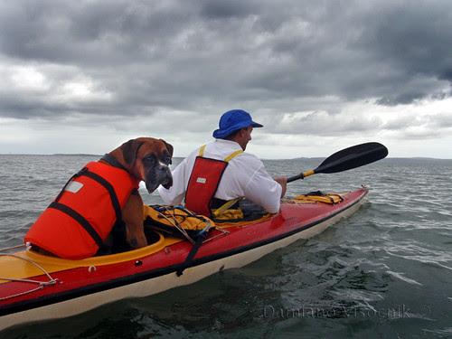 kayaking pooch (c)