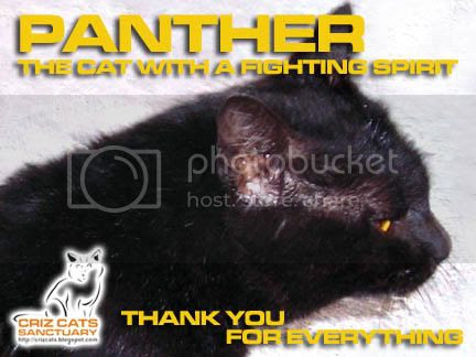 PANTHER FIGHTER