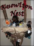 Knowlton Nest