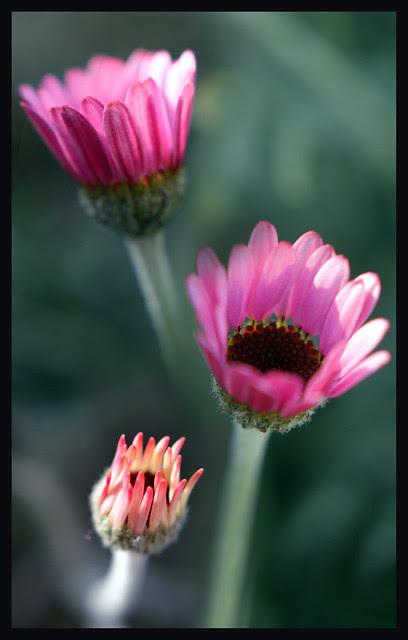 Kew Gardens - collage -