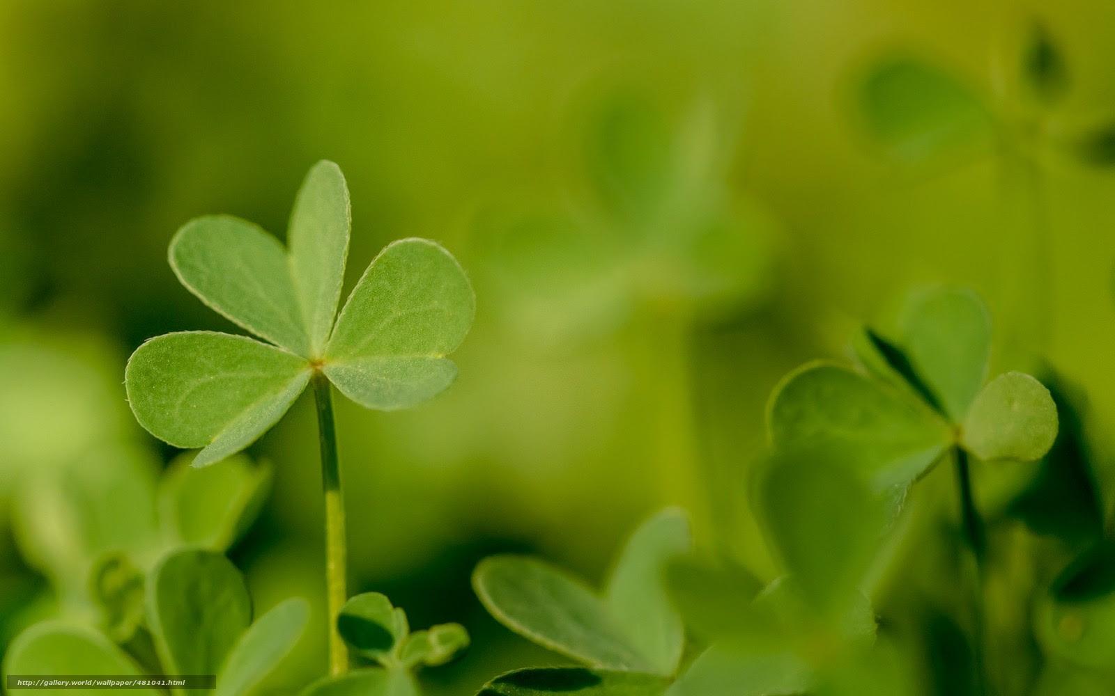 壁紙をダウンロード 葉 クローバー 植物 菜 デスクトップの解像度の