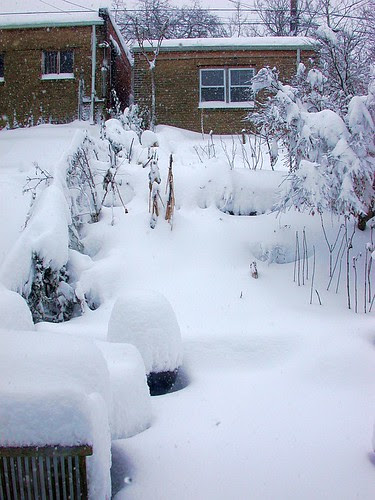 The big blizzard of 2010.