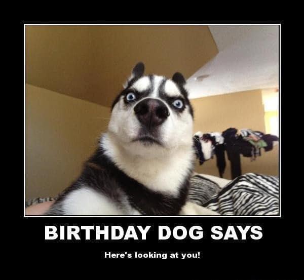 The Funny Meme Funny Birthday Animal Memes 100 Ultimate Funny Happy Birthday Meme S
