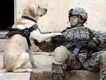 Американский боец со служебной собакой. Фото с сайта arcadedigital.com