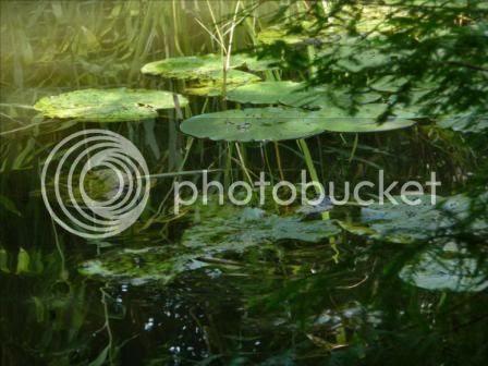 Jardin botanique, strasbourg, nenuphar,
