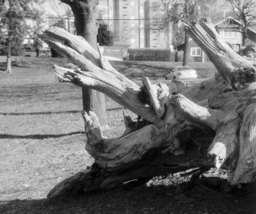 Blooming Stump