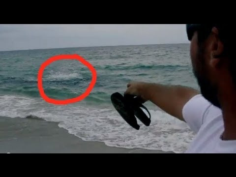 SHARK ATTACK in 3 Feet of Water! - YouTube