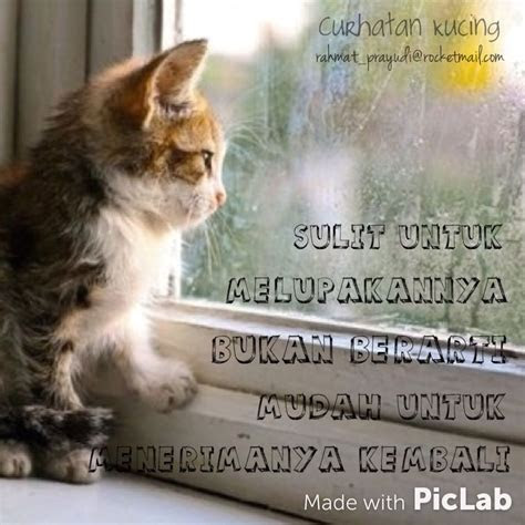 curhatankucing cat quotes galau curhat katakata