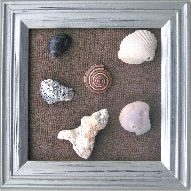 Collection of coral and shells