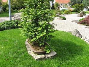 Japanischer Garten Bad Langensalza