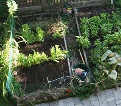 lettuce bed