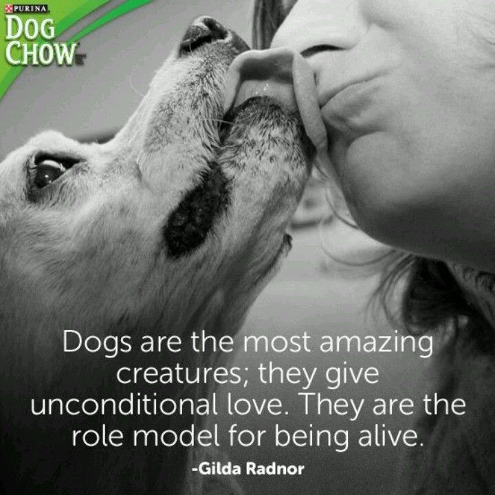 Dog Devotion Quotes. QuotesGram