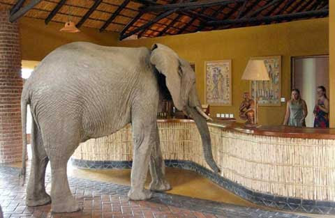 Animal Pictures National on Africa Science  Dna Tests Show African Elephants Are Two Species