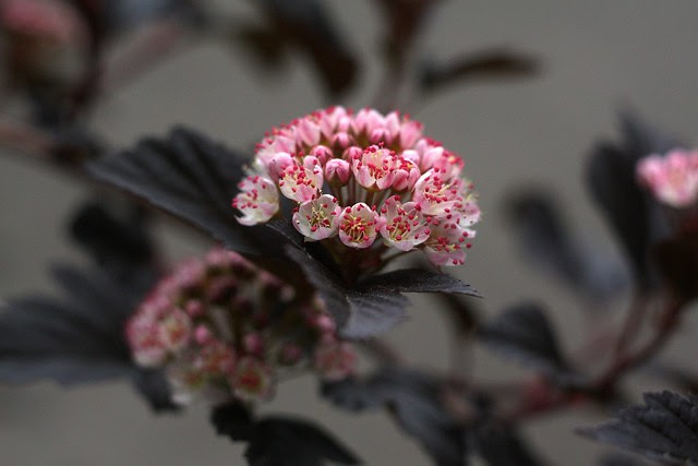 flowers, june 2011