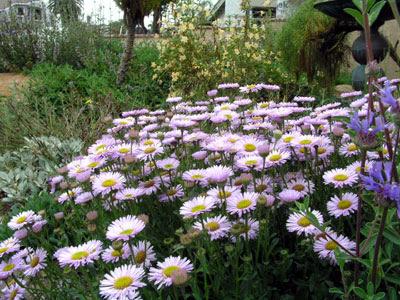 Favorite California Native Plants