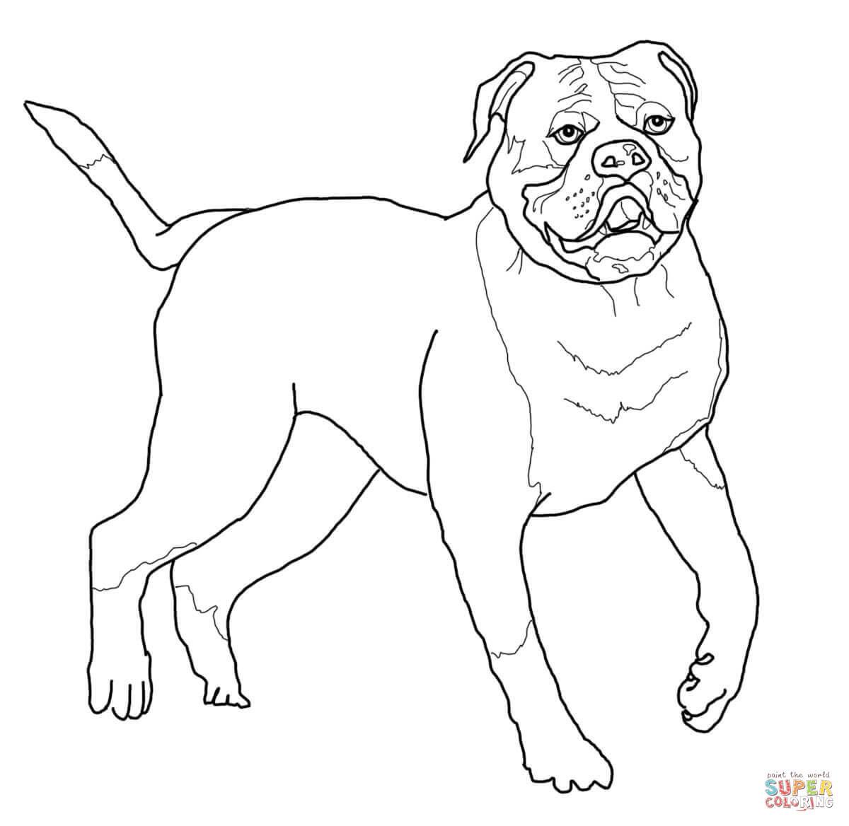 Klick das Bild American Bulldog