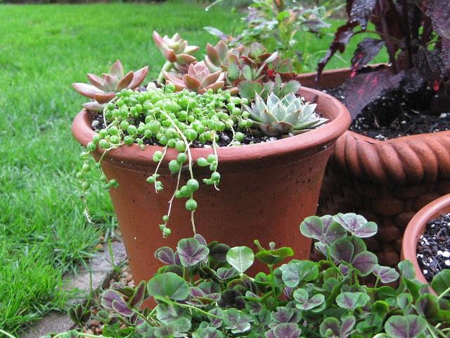 garden early morning II