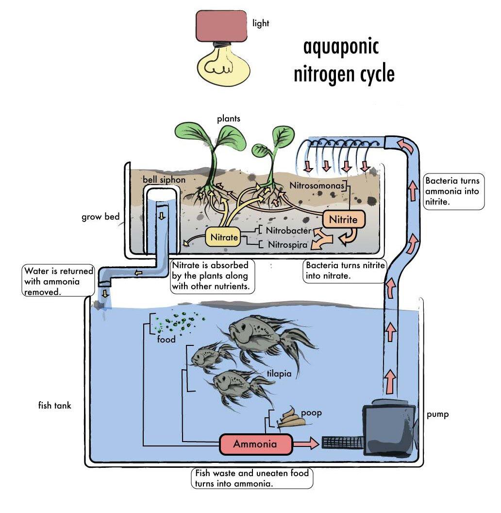 aquaponics diy plans 2