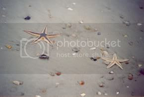Starfish on the beach of St. Augustine.