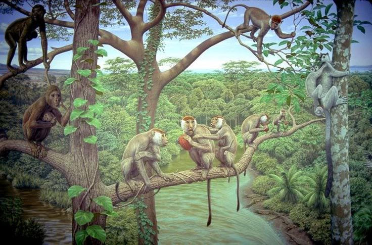 Aegyptopithecus, also called the Dawn Ape, is an early fossil catarrhine that predates the divergence between hominoids (apes) and Old World monkeys. It is known from a single species Aegyptopithecus zeuxis and lived some 35-33 million years ago in the early part of the Oligocene epoch. It likely resembled modern-day New World monkeys (it is about the same size as a modern howler monkey). Aegyptopithecus fossils have been found primarily in modern-day Egypt. Aegyptopithecus is a crucial link between Eocene fossil and Miocene hominoids.