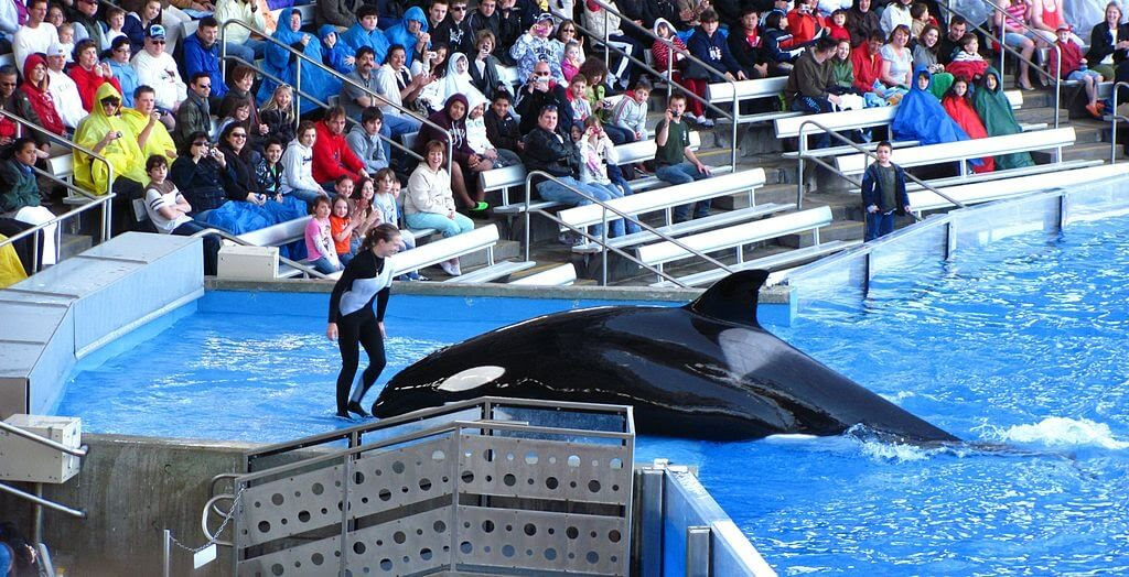 Trainer (believed to be Dawn Brancheau) with an orca