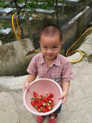 20120829_JustinShowStrawberries