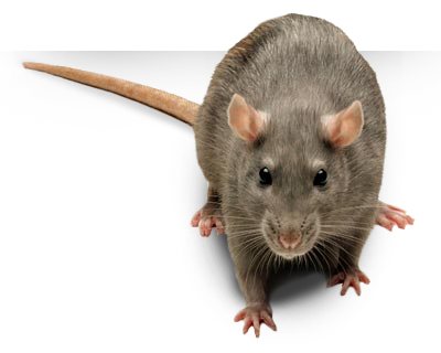 Rochester NY Pest Control: Getting Rid of Unwanted Guests