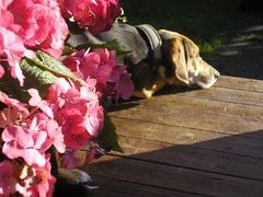 sommer, høst, 2008 073