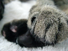 Maggie's paws