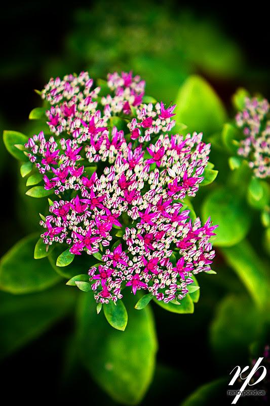 ~ 258/365 Flower ~