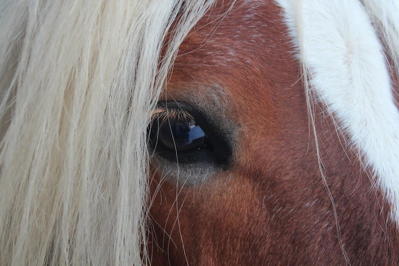 The Eye Of the Tiger... äh the horse